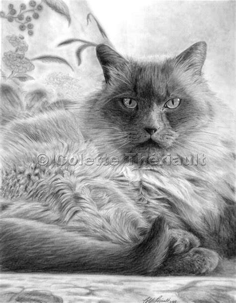 Himalayan Cat Drawing himalayan cat drawing pet portraits painting custom
