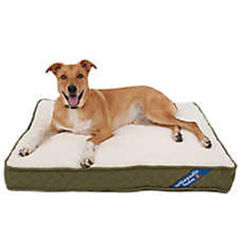 petsmart dog beds sale sale beds petsmart