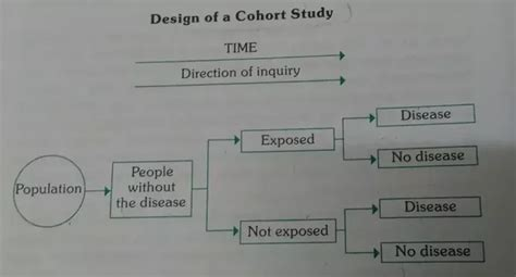 difference between cross sectional and cohort what are the differences between cross sectional studies