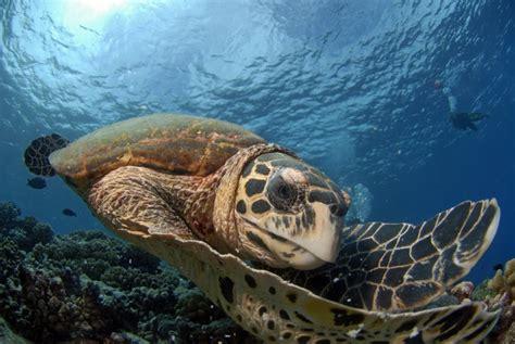 dive francesi diving immersioni polinesia francese kia ora viaggi