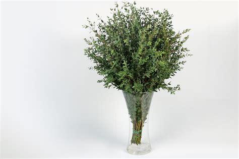 fiori modena orlandi ingrosso fiori modena gunny orlandi