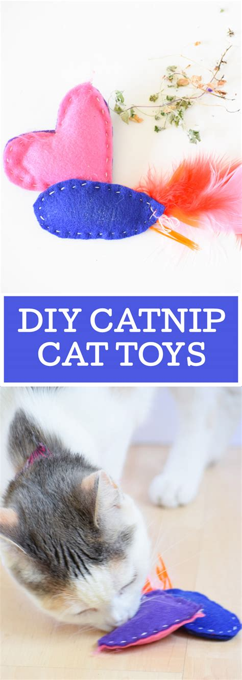 Diy Cat Toys From Marmalade by Diy Catnip Cat Toys Your Everyday Family