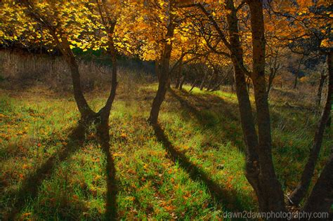 fall colors 2015 fall colors invade zion part 2 dawn2dawn photography