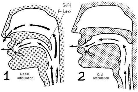 palate diagram soft palate diagram images