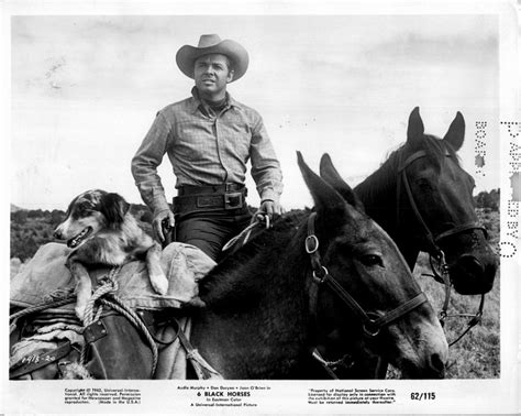 western film horse 17 best images about audie murphy westerns on pinterest