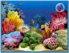 3d screensaver fish aquarium   Download free