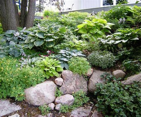 Rock Garden Plants For Shade Design Lessons From A Minnesota Shade Garden Beautiful Minnesota And Other