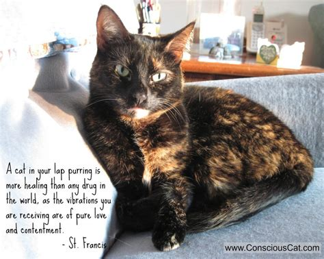 sunday quotes  healing power  purring