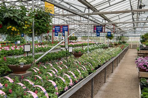 bedding plants aylett nurseries visit ayletts garden
