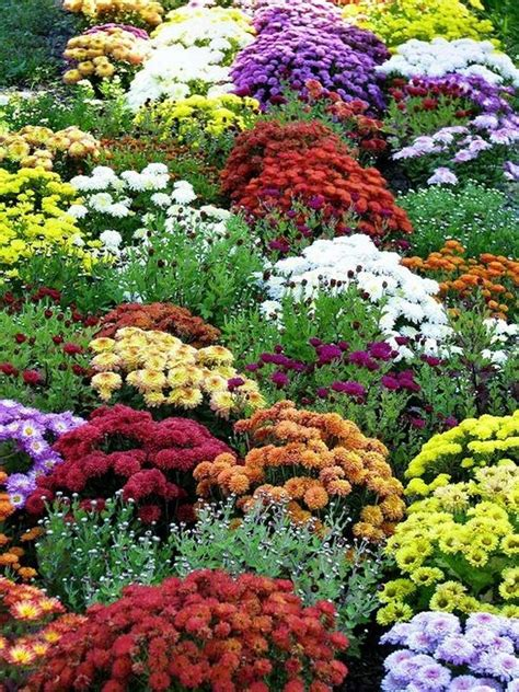147 Best Images About Autumn Garden Ideas On Pinterest Fall Flower Garden Ideas