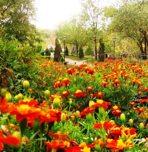 Amazing Flower Gardens Images The Botanical Garden Amazing Flowers 9769