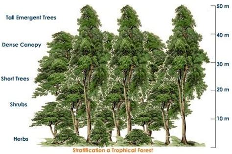 what are the characteristic features of tropical evergreen - Plants Found In Tropical Evergreen Forest