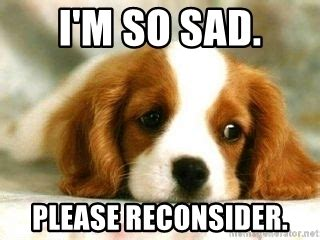 So Sad Meme - i m so sad please reconsider sad puppy meme generator