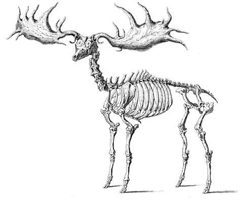 Printable Animal Skeletons | instant halloween art printable download walking