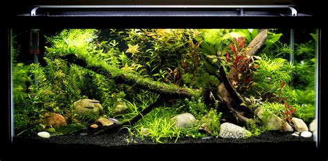 10 gallon planted tank led lighting finnex led owners unite or at least join the club page