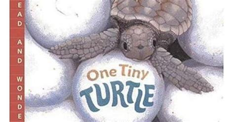 One Tiny Turtle Read And quot one tiny turtle quot children s book by nicola davies