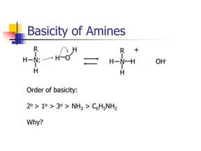 Protonation Of Amines Ppt Nitrogen Compounds Powerpoint Presentation Id 201196