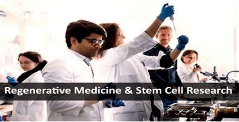 Mba Healthcare Administration Stem by Why And How To Pursue A Research Career In Regenerative