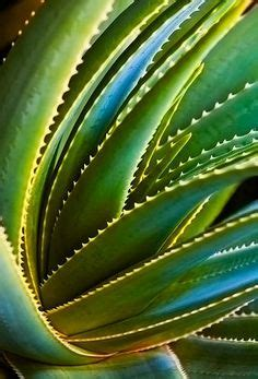 patterns in nature rainbow 1000 images about patterns in nature on pinterest ferns