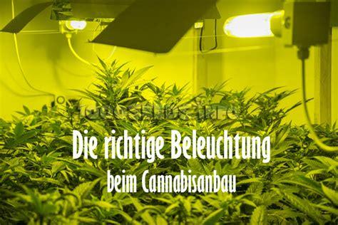 Grow Licht Beleuchtung Cannabis Growshop Grow Tipps