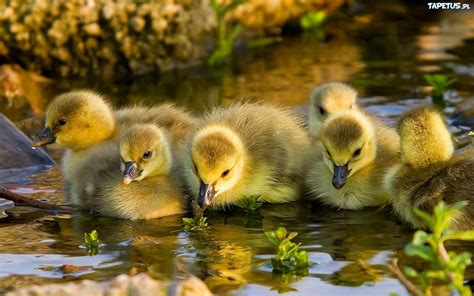 the cutest duck pictures fabulous duck appreciation