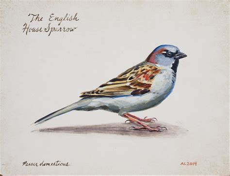 english house sparrow english house sparrow andrew leach projects