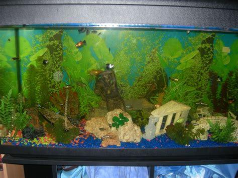 aquarium design eau chaude mon aquarium d eau chaude