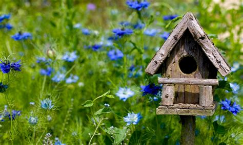 how to build a bird house bird house plans wilderness