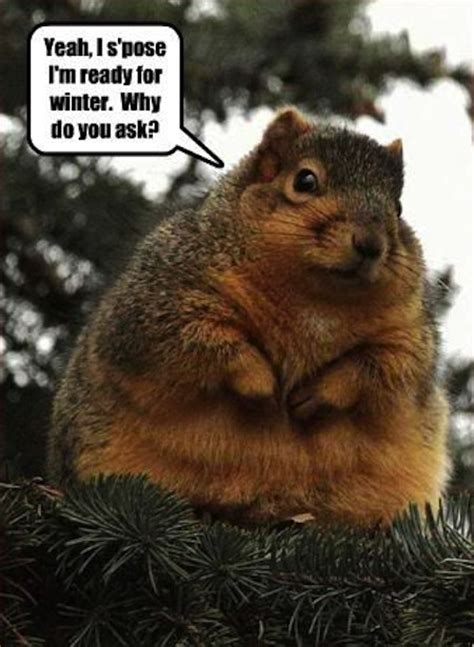 Funny Squirrel Memes - 13 funny squirrel photos and memes craveonline