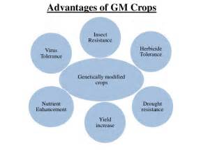 Genetically Modified Crops And Food Security Essay by Genetically Modified Crops And Food Security Scientific Facts