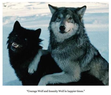 Meme Wolf - courage wolf meme blank www pixshark com images
