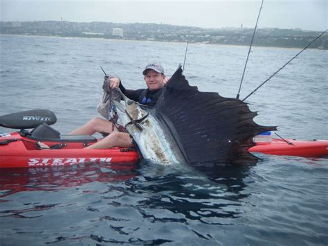sailfish boats south africa a magnificent sailfish caught and released off durban