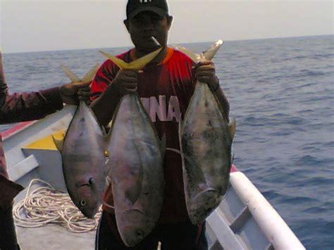 Makanan Ikan Cupang Nasi ikan hias foto ikan putih