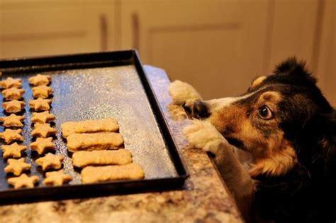 puppy cookies wants cookies 1funny