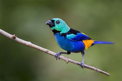 forest conservation helps brazil s seven colored tanager