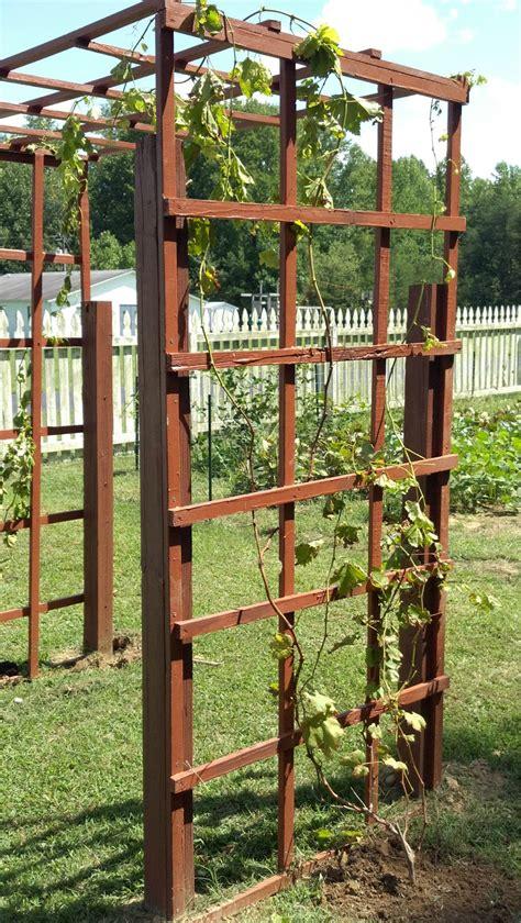 wine trellis garden fence grapevine trellis summers acres