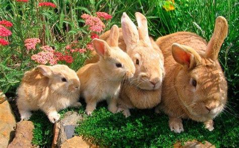 animales vertebrados donde viven como nacen animales viv 237 paros donde viven como nacen