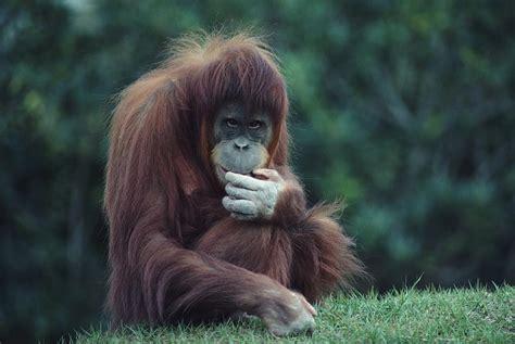 imagenes animales con pelo alethea