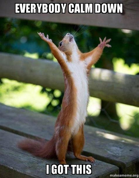 Calm The Fuck Down Meme - everybody calm down i got this happy squirrel make a meme