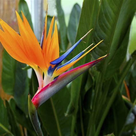 grow your own bird of paradise plant kit by plants from seed notonthehighstreet com