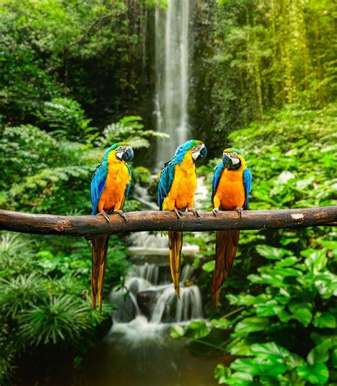banco de imagenes y fotos gratis dibujos de frozen para banco de imagenes gratis 12 fotos de paisajes naturales
