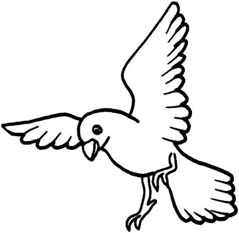 coloring pages dove bird drawing of dove bird clipart best
