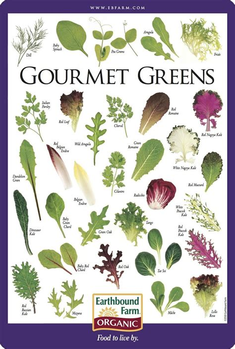 root vegetable identification gourmet greens identification chart vegetables can be