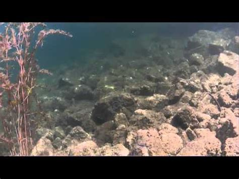 tugboat bay scuba diving tugboat bay kelowna bc youtube