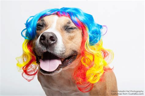 rainbow puppy wig cat wig cushzilla curly rainbow wig for dogs cats