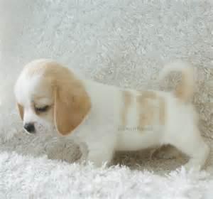 manny peagle rockin r puppies