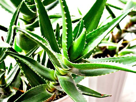 vaso fiori dwg piante grasse dwg id 233 es de design d int 233 rieur