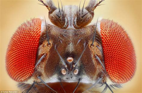photographer captures flies exquisite detail snapping 687 times