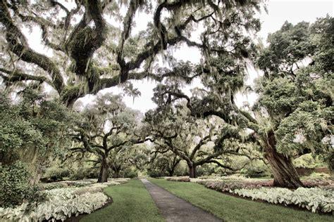 Live Oak Gardens by Brookgreen Gardens Henry