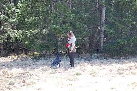 lade fredde 2011 05 senaste nytt jakt draghundsk 246 rning
